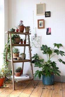 2016 plant ladder.jpg