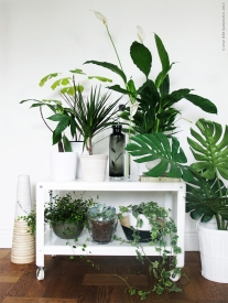 2016 plants 1.jpg