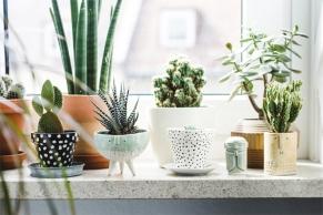 2016 plants diy pot.jpg